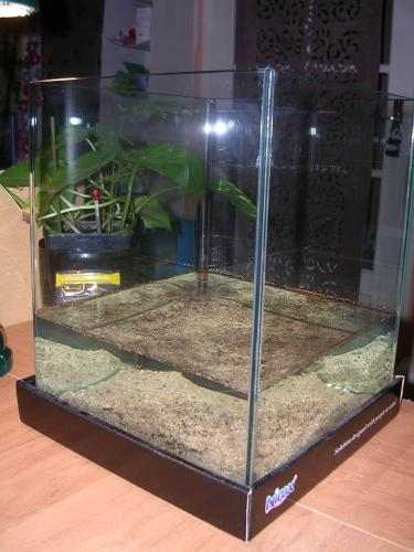 Elevages for Grand aquarium rond