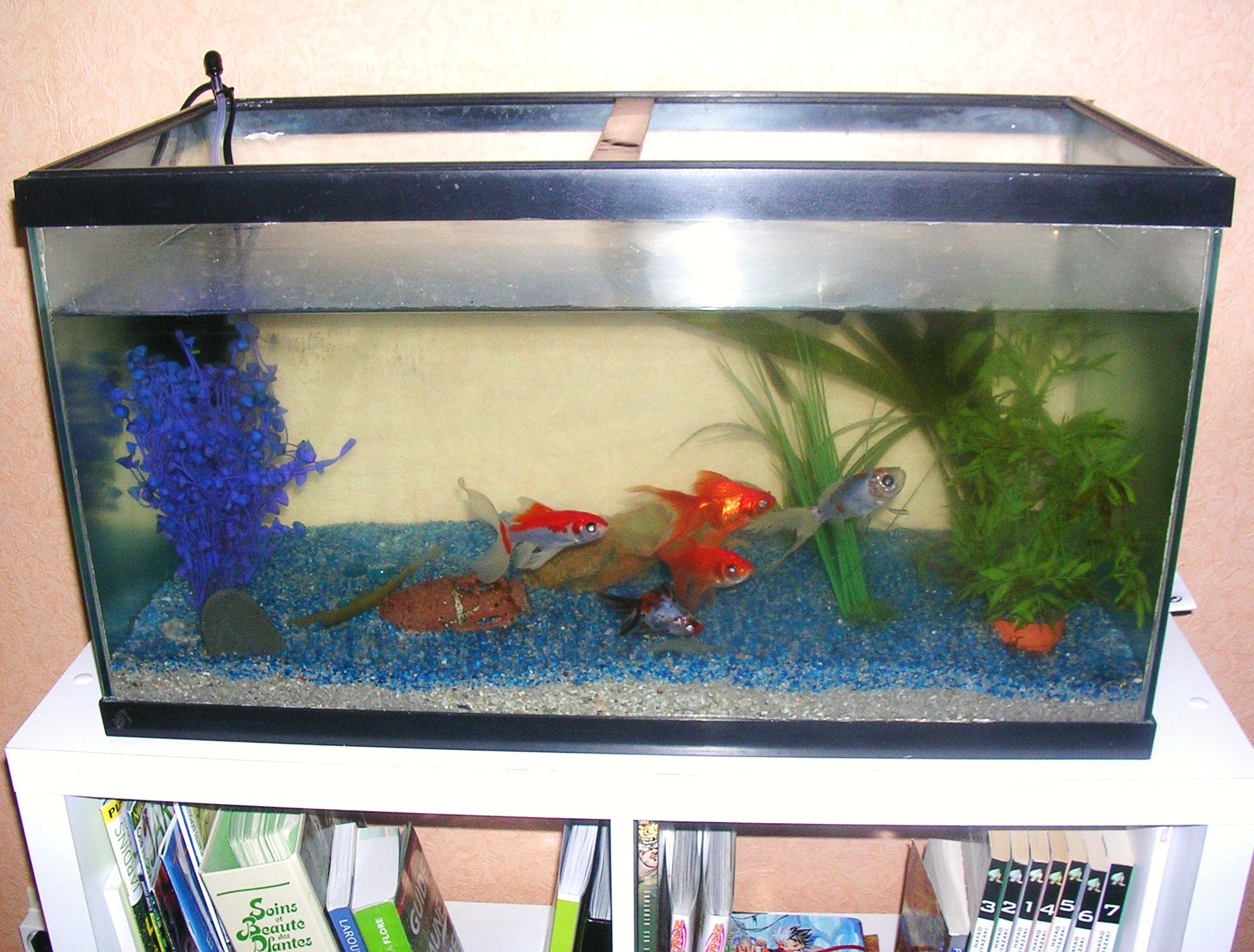 Aquarium for Ou placer aquarium poisson rouge